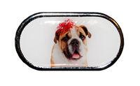Pouzdro se zrcátkem Vánoční motiv - Pes s mašlí